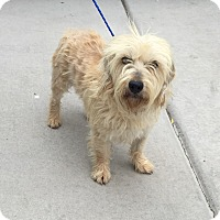 Adopt A Pet :: Edna - Las Vegas, NV