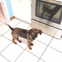 Adopt A Pet :: Meag - Plainfield, IL
