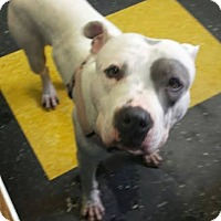 Adopt A Pet :: Rocco - Acushnet, MA