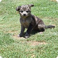 Adopt A Pet :: Jay Jay - Groton, MA
