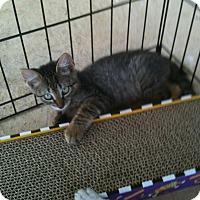 Adopt A Pet :: Charlie - Horseshoe Bay, TX