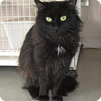 Adopt A Pet :: Beauty - Toledo, OH