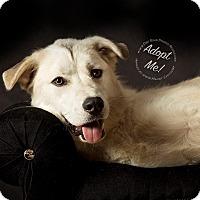 Adopt A Pet :: Nanuk - Gillsville, GA