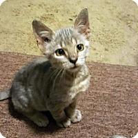 Adopt A Pet :: Kingston - Austin, TX