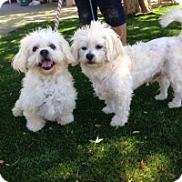 Adopt A Pet :: Lily and Lenny - Temecula, CA