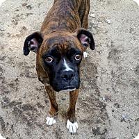 Adopt A Pet :: AXL - Portland, ME