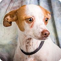 Adopt A Pet :: JEMMA - Anna, IL