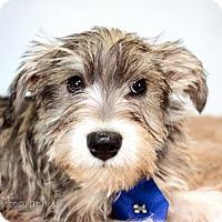 Adopt A Pet :: Jackson - St. Louis Park, MN