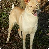Adopt A Pet :: Belle - Newport, NC