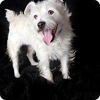 Adopt A Pet :: Paisley - Van Nuys, CA