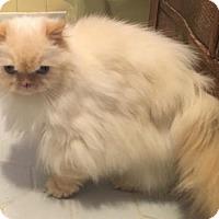 Adopt A Pet :: Marley - Devon, PA