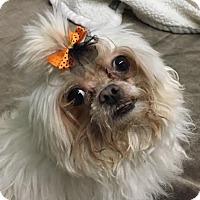 Adopt A Pet :: Jade - Philadelphia, PA