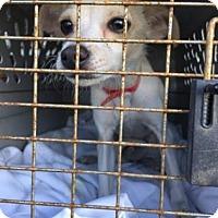 Adopt A Pet :: Peanut - Visalia, CA