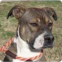Adopt A Pet :: Jenny - Adamsville, TN