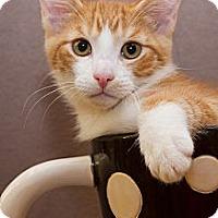 Adopt A Pet :: Nic - Irvine, CA