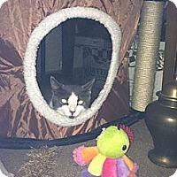 Adopt A Pet :: Bunny - Pittstown, NJ
