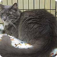 Adopt A Pet :: Sherman - New Port Richey, FL