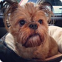 Adopt A Pet :: Kenny - Everett, WA