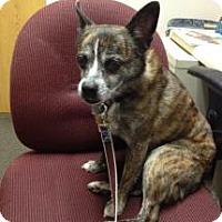 Adopt A Pet :: Ruby - Richmond, VA