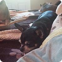 Adopt A Pet :: Kerby - Brooksville, FL
