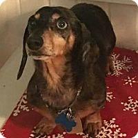 Adopt A Pet :: Poppy - Marcellus, MI