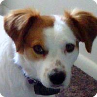 Adopt A Pet :: RYDER - Pine Grove, PA