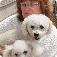 Adopt A Pet :: Bogey - Plain City, OH