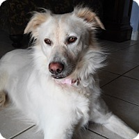 Australian Shepherd Mix Dog for adoption in Phoenix, Arizona - Chloe