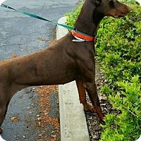Adopt A Pet :: Red - REDDING, CA