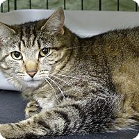 Adopt A Pet :: Striker - Marlinton, WV