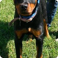 Adopt A Pet :: Sassy - Erwin, TN