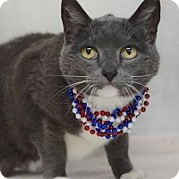 Adopt A Pet :: Jeannie - Dublin, CA