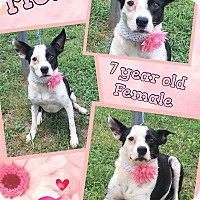 Terrier (Unknown Type, Medium) Mix Dog for adoption in Lexington, North Carolina - Chismosa (Mosa)