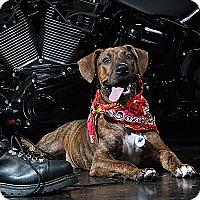 Adopt A Pet :: Porter - Jackson, TN