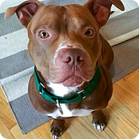 Adopt A Pet :: Dallas - Mansfield, MA