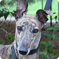 Adopt A Pet :: Julie - Nashville, TN