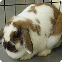 Adopt A Pet :: HUMMUS - Pittsburgh, PA