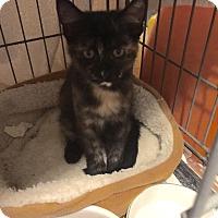 Adopt A Pet :: ALEXIS - Brea, CA