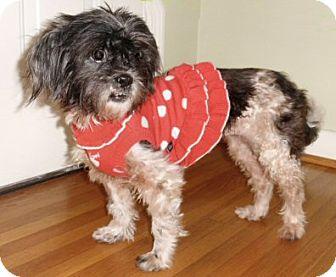 Shih Tzu Dog for adoption in Mooy, Alabama - Maggie