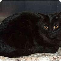 Adopt A Pet :: Gretchen - Sacramento, CA