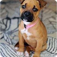 Adopt A Pet :: Jupiter - Reisterstown, MD