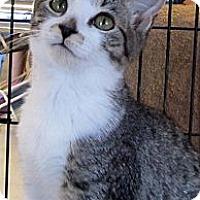 Adopt A Pet :: Norma - Seminole, FL