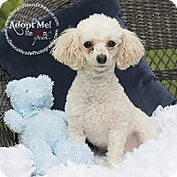 Adopt A Pet :: Cuddles~Adopted! - Troy, OH