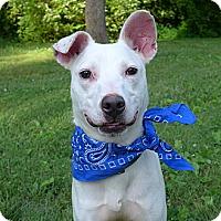Adopt A Pet :: Ludwig - Mocksville, NC