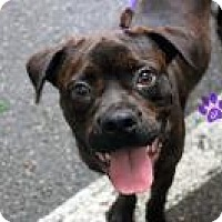 Adopt A Pet :: Luke - Gainesville, FL