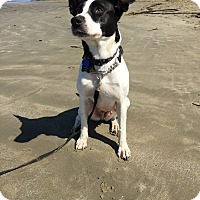 Adopt A Pet :: ANNA - San Pedro, CA