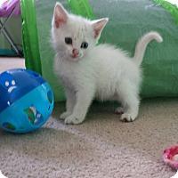 Adopt A Pet :: Dutchess - Fayette City, PA