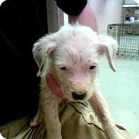 Adopt A Pet :: A263634 - Conroe, TX