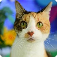 Adopt A Pet :: Sassy - Bradenton, FL