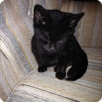 Adopt A Pet :: lovey - millville, NJ